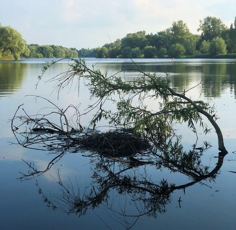 Nest im See